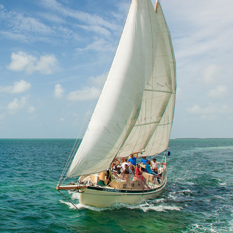 Daily Sails